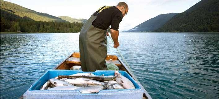 Aktuelle Themen zu Fisch Falstaff