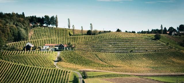 126 Top Weingüter Der Region Steiermark